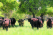 Prime grazing country sold for $9.1m